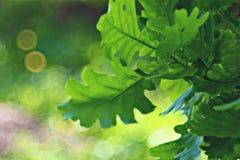 Green oak leaves Stock Photo