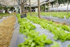 Green oak field Stock Photo
