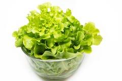Green Oak Lettuce. For healthy eating Stock Photo