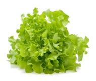 Green oak lettuce leaf Stock Photo