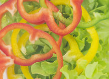 Green oak lettuce with multi color bell peppers Royalty Free Stock Image