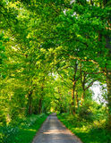 Green oak road Royalty Free Stock Images