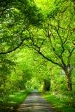 Green oak road Stock Photo