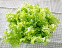 Green Oak salad leaves. Close up of Green Oak salad leaves Royalty Free Stock Photos