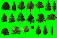 Tree set for architecture landscape design Royalty Free Stock Images