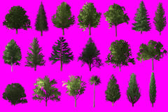 Tree object collection  on magenta chroma key screen for CG. Stock Images