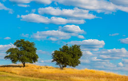 Green Oak Trees on Hill With Clouds and Blue Sky Royalty Free Stock Photography