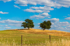 Green Oak Trees on Hill With Clouds and Blue Sky Stock Photos