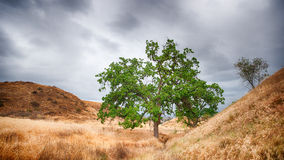 Green Oak in a Vallley Royalty Free Stock Photo