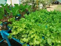 Hydroponic garden stock photos