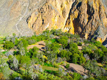Green oasis on the bottom of Colca Canyon in Peru Royalty Free Stock Images