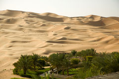 Green oasis in the middle of a sand desert Royalty Free Stock Photos