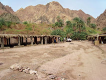 Green oasis on Sinai. Stock Images