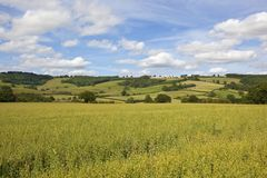Oat field and patchwork hills in summertime Royalty Free Stock Image