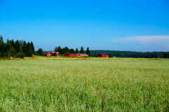 Green oat field on summer day Royalty Free Stock Photos
