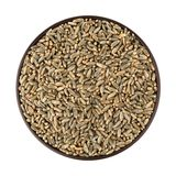 Green oat grain Royalty Free Stock Photo