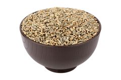 Green oat grain Stock Image