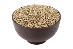 Green oat grain Stock Image