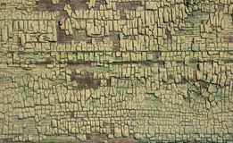 Green ochre shade coloured cracked paint peeling on wood texture. Royalty Free Stock Photo