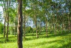 green ogrodowa Zdjęcie Royalty Free
