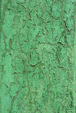 Green old shabby wood wall Royalty Free Stock Images