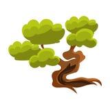 Green Old Tree Bonsai Miniature Traditional Japanese Garden Landscape Element Vector Illustration Royalty Free Stock Photos