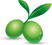 Green Olive. Isolated green olive  illustration Stock Photography