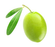 Free Green Olive Stock Images - 39742324