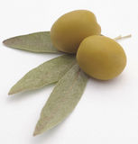 Green olive on branch Stock Photography