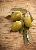Green olive branch Stock Photos