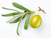 Green olive on branch Royalty Free Stock Image
