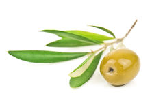 Green olive and branch Royalty Free Stock Photo
