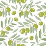 Green olive branches seamless pattern Royalty Free Stock Images