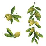 Green olive set Stock Photos