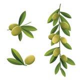 Green olive set Stock Photos
