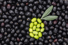 Green Olive shape on Black olive background. Fresh Harvested Oli Royalty Free Stock Images