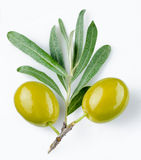 Green olives. Two green olives with a sprig on a white background Stock Photography