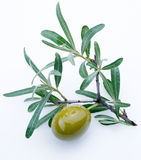 Green olives. Green olive with a sprig on a white background Stock Photos