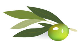 Green olives on branch with leaves. Isolated on white Royalty Free Stock Photo