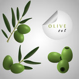 Green olives. Olives on the grey background Stock Images