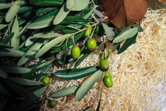 Green olives in the hay Royalty Free Stock Image
