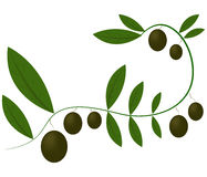 Green olives illustrated Stock Image