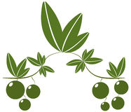 Green olives illustrated Royalty Free Stock Image