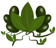 Green olives illustrated Royalty Free Stock Photos