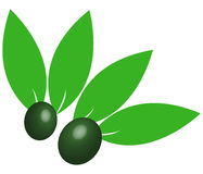 Green olives illustrated Royalty Free Stock Images