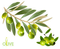 Green olives with leaves. Stock Photo