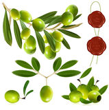 Green olives with leaves. Royalty Free Stock Photography