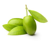 Green olives with leaves Stock Image