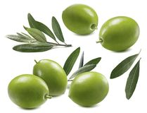 Green olives leaves set isolated on white background. As package design element Royalty Free Stock Photo