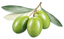 Green olives with leaves on a white background. royalty free stock image